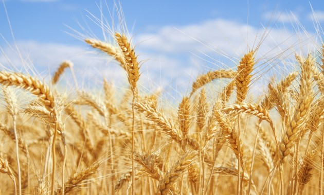 Quais são as alergias alimentares mais comuns?