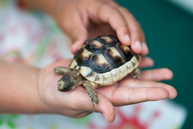 Os 5 melhores animais de estimação para crianças