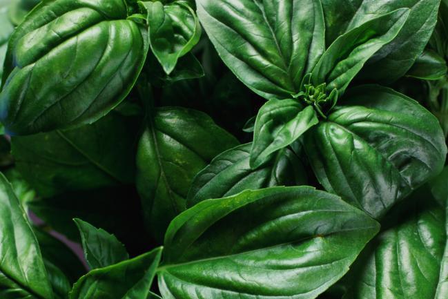 Resgate anos com essas 5 ervas e especiarias